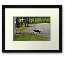 Cat-Dash Framed Print