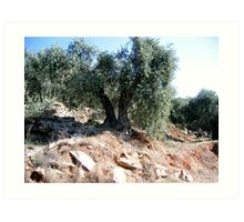 A DOUBLE RATION OF OLIVES. Art Print