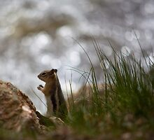 Chipmunk on the river bank by Belle Farley