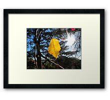 Last autumn leaf Framed Print
