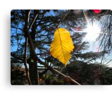 Last autumn leaf Canvas Print