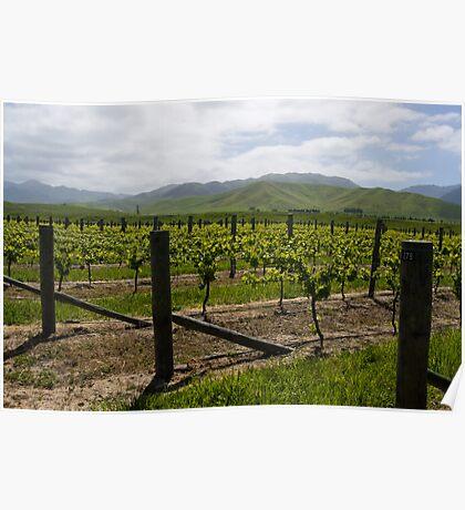 Vineyard Landscape, Marlborough Poster