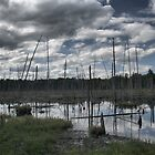Long Swamp HDR by Allen Lucas