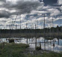Long Swamp HDR by Allen Lucas