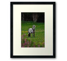 Horse 2 Framed Print