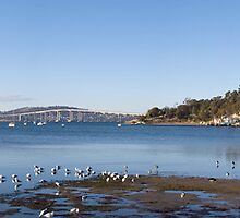 Cornelian Bay - Hobart by Anthony Davey