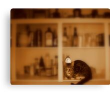kittens now in stock. Canvas Print