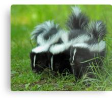 Baby Skunk Trio Metal Print
