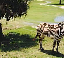 Africa at Busch Gardens by Sheryl Unwin