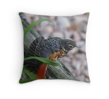 Baby robin, fluffing its' feathers Throw Pillow