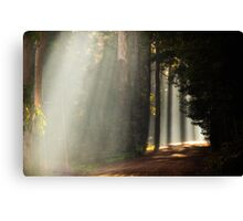 Foggy Road Canvas Print