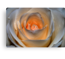 Peachy White Rose Canvas Print