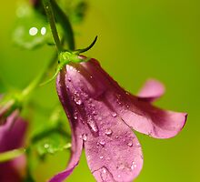 After The Rain by duncandragon