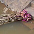 Waterlillies on steps  by RobAllsop