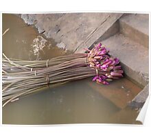 Waterlillies on steps  Poster