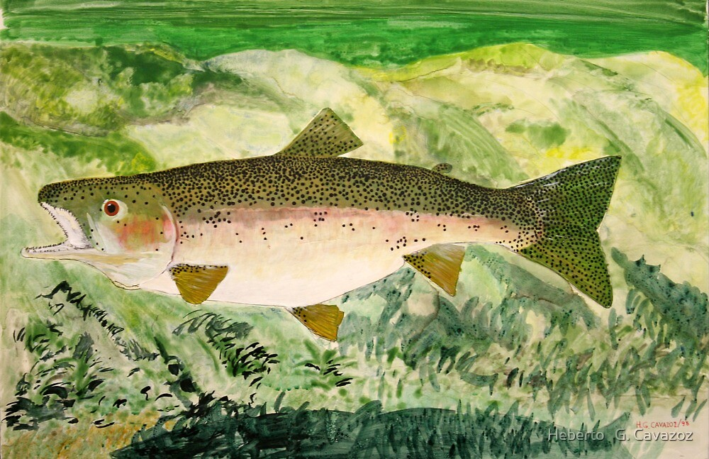 Rainbow trout  by Heberto   G. Cavazoz