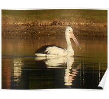 Pelican Reflected Poster