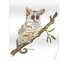 Pippin, the Bush baby Poster
