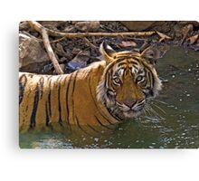 Bengal Tiger (Panthera tigris) Canvas Print