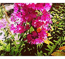 Just living is not enough.  One must have sunshine, freedom, and a little flower.  ~Hans Christian Anderson Photographic Print