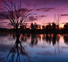 Wonga Wetlands 3 by John Vandeven