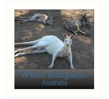 White Kangaroo Art Print