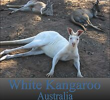 White Kangaroo by Debbie  Jones