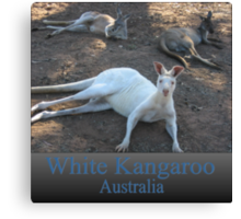 White Kangaroo Canvas Print