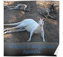 White Kangaroo Poster