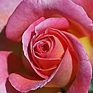 Rosy Rose by Monnie Ryan