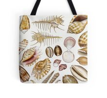 Australian Shells Tote Bag