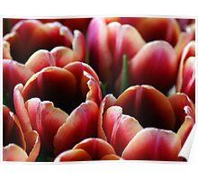 Tulip Cluster Poster