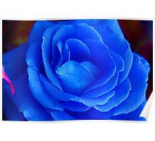 'Blue Rose' Poster