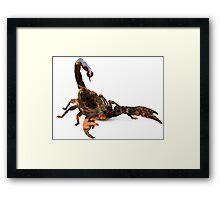 03. Desert Scorpion Double Exposure Framed Print