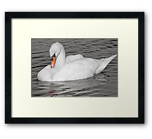 Sleeping Swan, Hogganfield Loch, Glasgow, Scotland, UK, Europe Framed Print