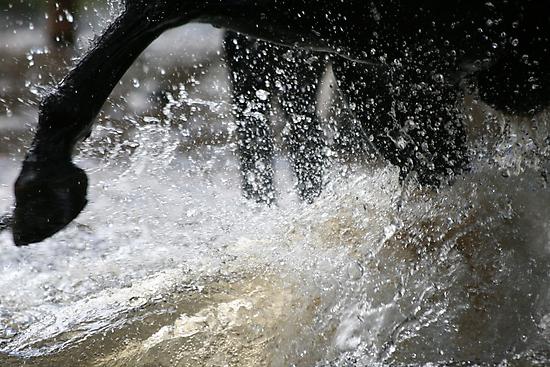 Water fight!! by Vikki Shedden Photography