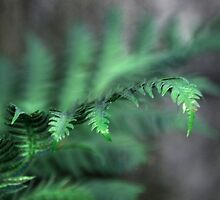 Fern Gully by linaji