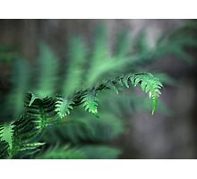 Fern Gully Photographic Print