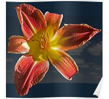 Red and Yellow Lily Poster