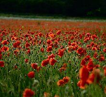 Poppy Field by iainf2010