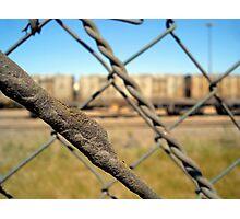 Through the wire Photographic Print