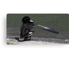 The Tufted Duck Canvas Print