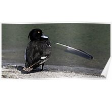 The Tufted Duck Poster