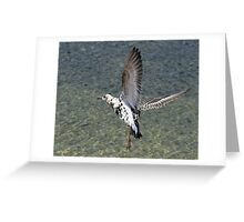 Flight Of The Ruff Greeting Card