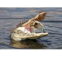 Alligator Catching and Cracking a Crab Photographic Print