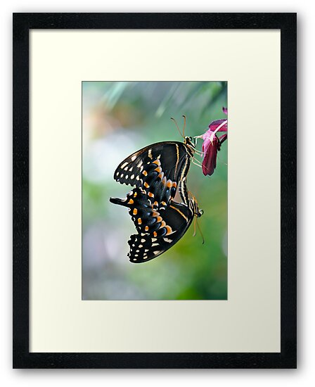 Butterfly Love by Ainsley Kellar Creations