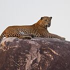Wild Male Leopard by Neil Bygrave (NATURELENS)