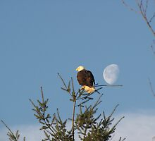 Eagle turning his back on the Moon by Gaetan