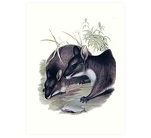 The Parma wallaby painting Art Print