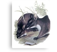 The Parma wallaby painting Metal Print